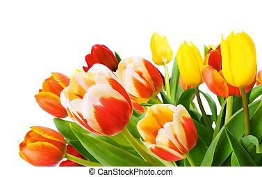 Bouquet of tulips isolated on white