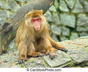 Monkey sitting on the stones