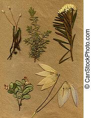 vendimia, herbarium, Plano de fondo, viejo, papel