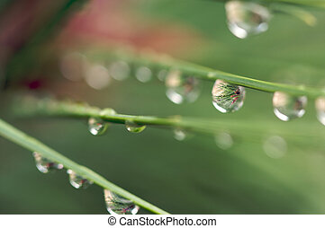 Macro Water Drops on Pines