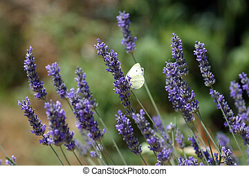 Butterfly feeding on blue flower