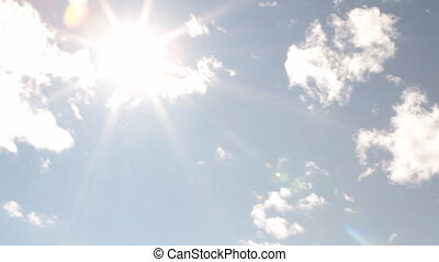 bright sun, Aspen trees and grassy field