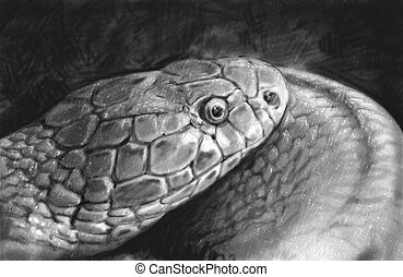 Snake tattoo sketch illustration made with pencil
