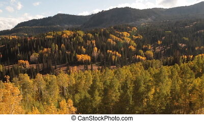 pan across forest and mountains with yellow aspens