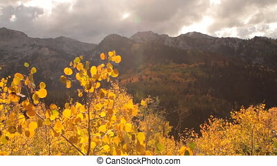slide rail shot of yellow aspens and rugged mountain peaks