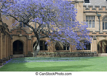 Sydney University Quadrangle - gothic revival architecture...