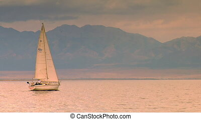 A sailboat sails in pastel morning, gull passes