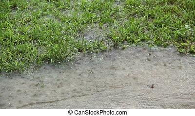 Rain On Grass 1