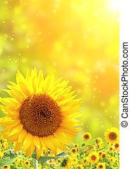 Sunflowers - Bright yellow sunflowers and sun