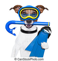 scuba dog with tins snorkel and goggles