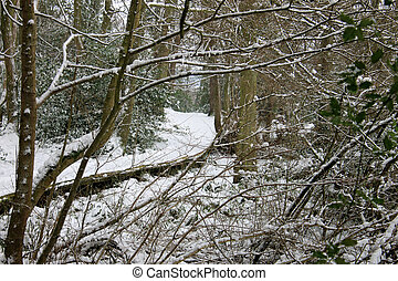 Path in snowy forest - Scenic view of winding path in snowy...