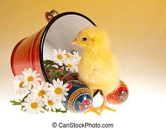 小雞, 水桶, 復活節