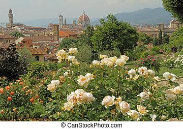 flowering rose in Giardino delle Rose - Rose Garden with...