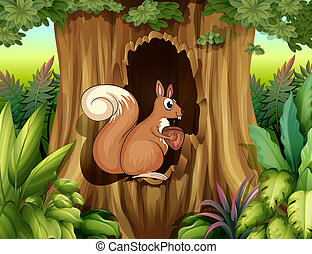 A squirrel in the forest - Illustration of a squirrel in the...