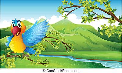 A colorful bird across the mountain