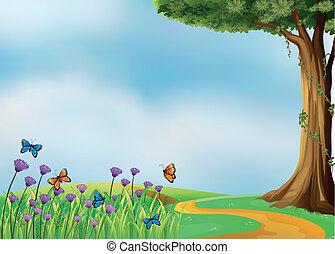 borboletas, bonito, natureza