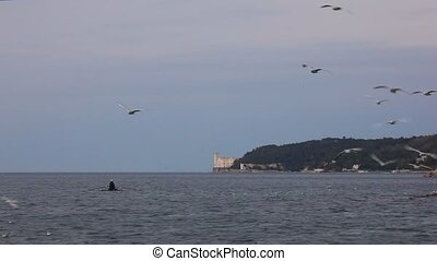 Miramare castle - View of Miramare castle with seagulls on...