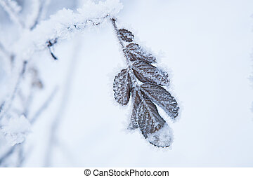 Snow covered leaves - Closeup of snow and frost covered...