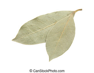 bay leaf - Dried bay leaves on white background