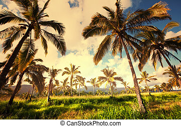 Palm plantation on Hawaii