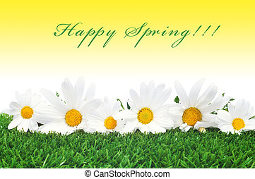 happy spring - some oxeye daisies on the grass and the...