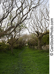 tree lined grass path - a tree lined grass path in the...