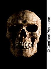 Skull on Black - Portrait of human skull isolated on black...