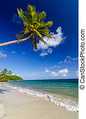 Palm Tree over White Sand Beach - Palm tree extending over...