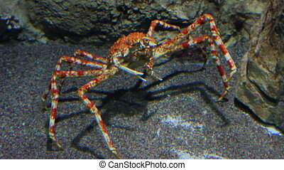 large crab underwater