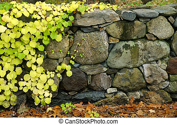 wall with vine - stone wall with vine on left and across the...