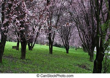 Treetops full of flowers