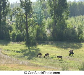 Horses graze in a peaceful sunlit pasture