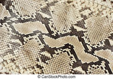 serpent, peau, cuir