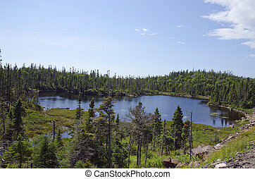 Forest lake in sunny day in Ontario near Superior Lake