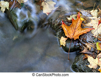 Orange Leaf and Stream - A closeup of an orange maple leaf...