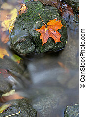 Orange Leaf on a Stone - A closeup of an orange maple leaf...