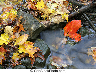 Autumn Stream Bed - A closeup of a red maple leaf in a...