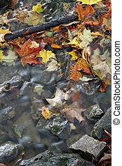 Fall Leaves in a Stream - A closeup of a stream in autumn...