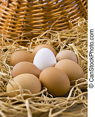 one white egg with brown eggs