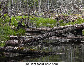 stream in haliburton - Illustration of a Stream in...
