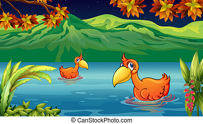 Two ducks swimming in the river - Illustration of two ducks...