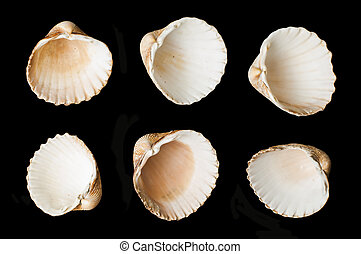 Set of sea ??shells black isolated. Studio shot