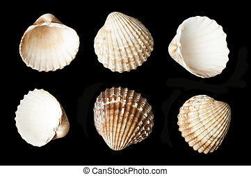 Set of sea shells black isolated Studio shot