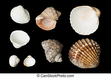 Set of sea ??shells black isolated - Set of sea ??shells and...
