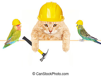 Cat with hammer and birds. Construction background.
