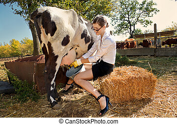 Woman milking cow  - Young woman milking cow on farm