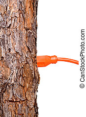 Extension cord in a tree trunk