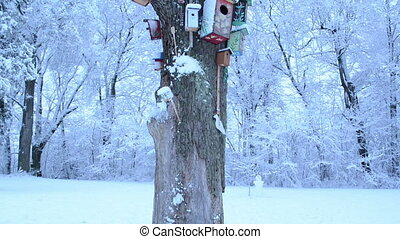 bird houses colors snow - old dead tree trunk and colorful...