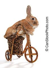 ?ute rabbit riding bike - Photo of cute rabbit riding bike....