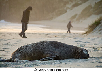 people passing seal - people walking by a giant sea lion